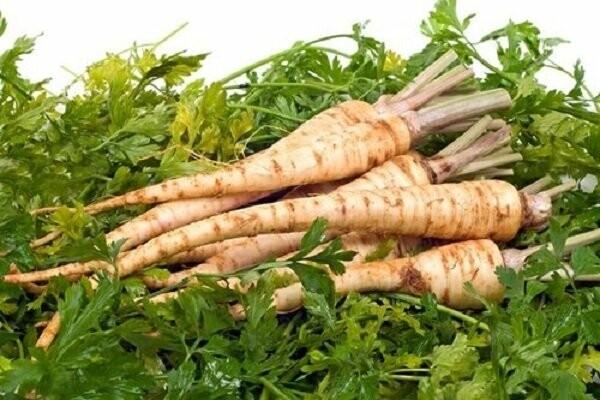 Які овочі  мають цілющій вплив на організм?, фото-9