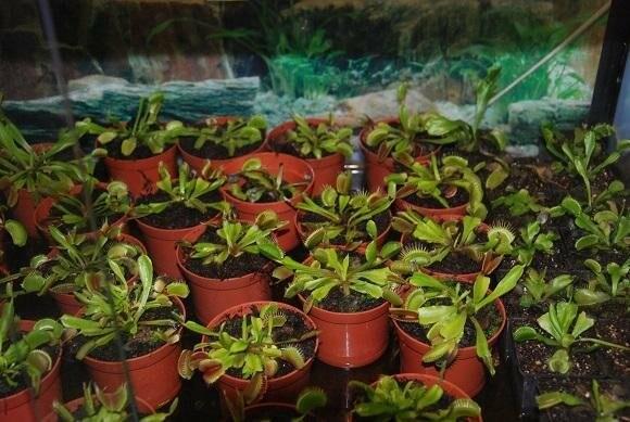 В Бердянск впервые приехала выставка растений хищников и обитателей джунглей (ФОТО), фото-1