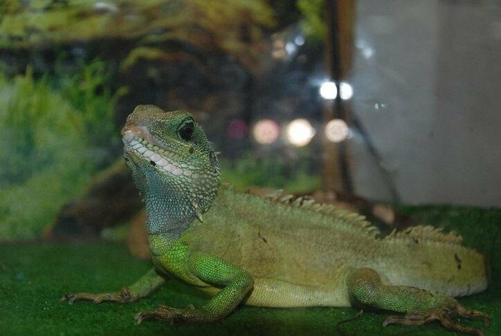В Бердянск впервые приехала выставка растений хищников и обитателей джунглей (ФОТО), фото-3