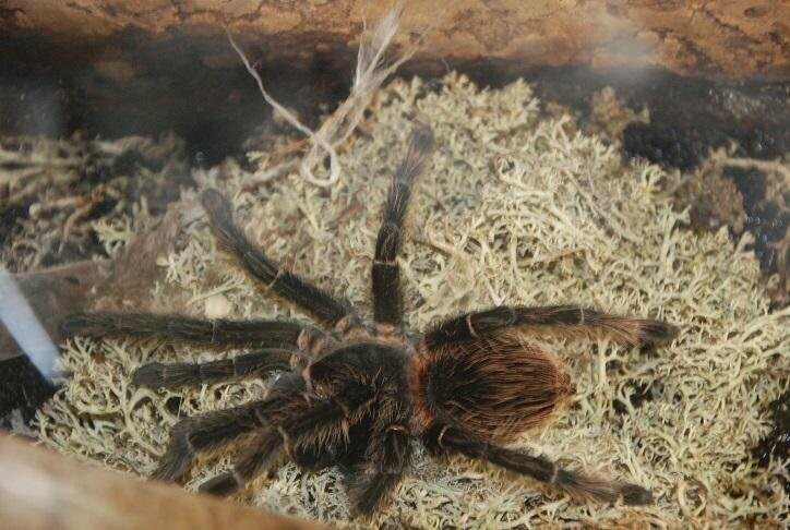 В Бердянск впервые приехала выставка растений хищников и обитателей джунглей (ФОТО), фото-5
