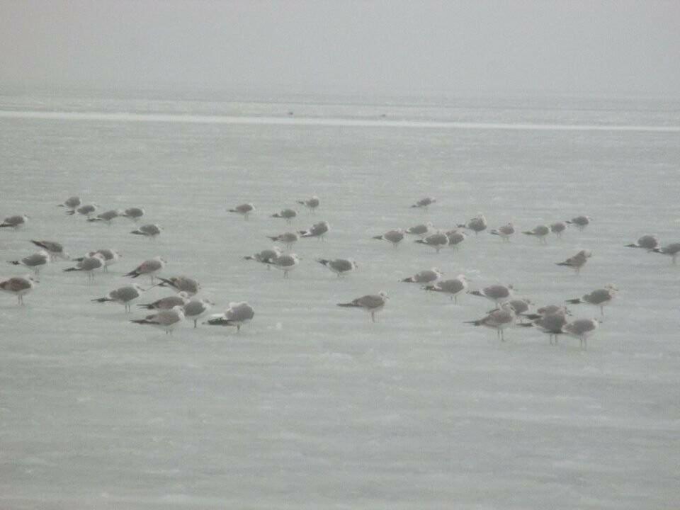Азовское море погрузилось в зимний сон ( ФОТО), фото-3