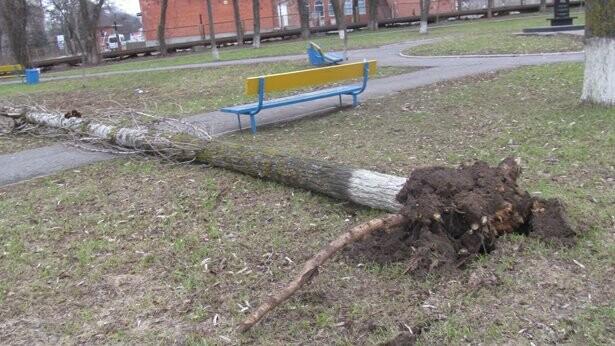 В Бердянске сразу ветер повалил четыре тополя, фото-1