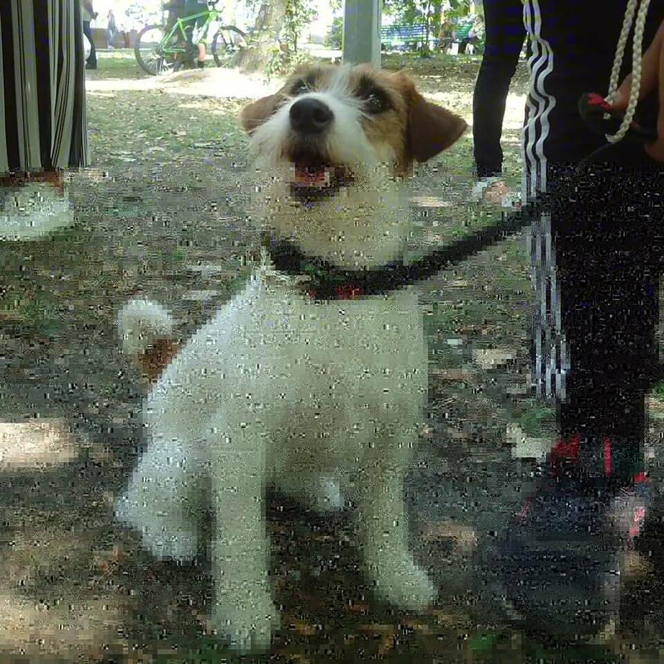 В Бердянске прошла выставка собак на «Кубок мэра 2019» (ФОТО), фото-2