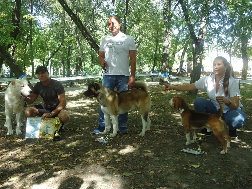 В Бердянске прошла выставка собак на «Кубок мэра 2019» (ФОТО), фото-3