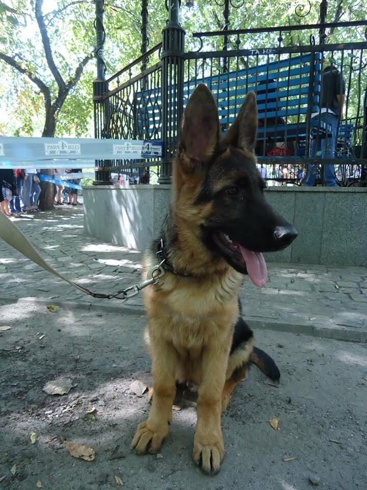 В Бердянске прошла выставка собак на «Кубок мэра 2019» (ФОТО), фото-5