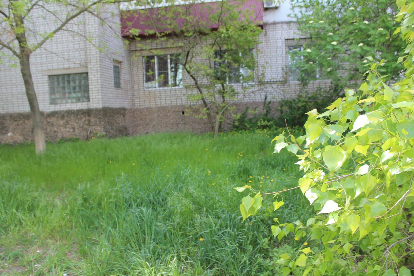 У Бердянську косять траву тільки в центрі? - ФОТО, фото-8