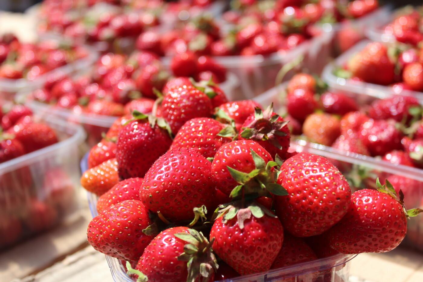 Збираємо кошик для пікніка на бердянському ринку, фото-33