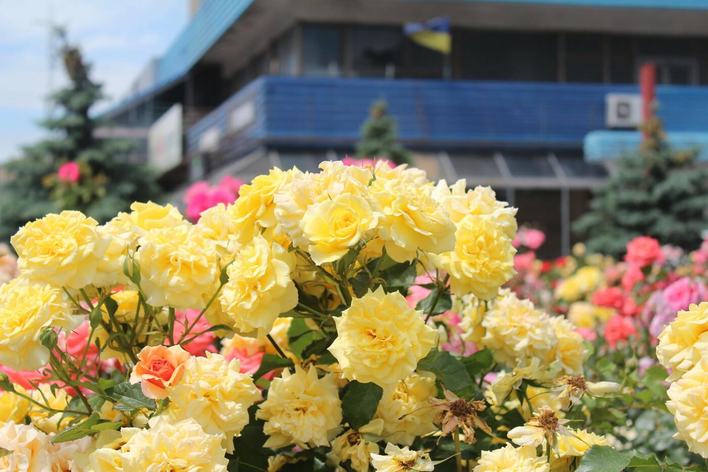 Центр Бердянска цветет и пахнет, фото-3