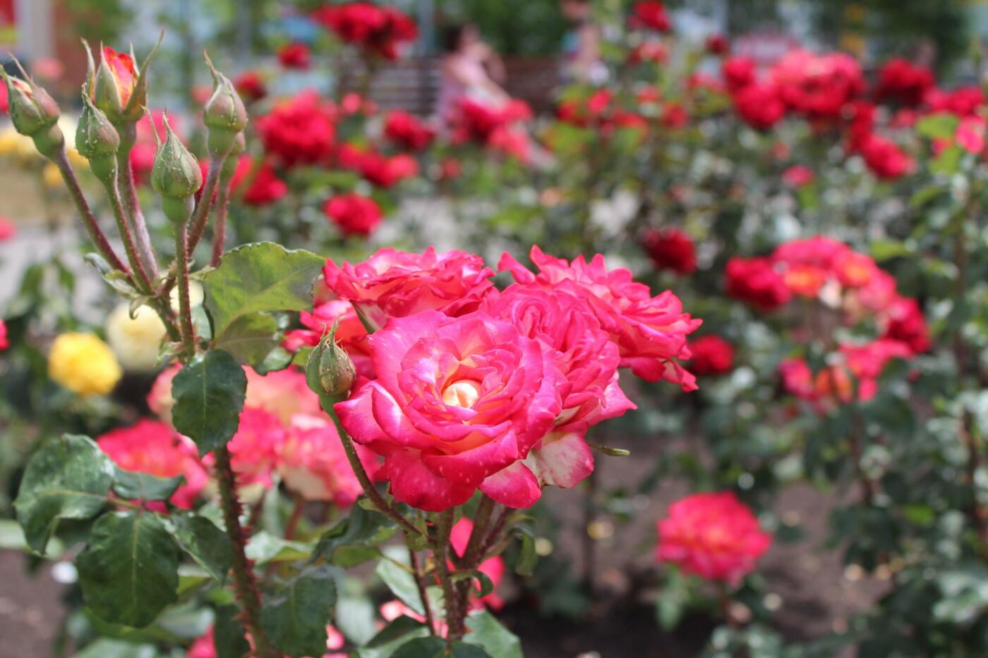 Центр Бердянска цветет и пахнет, фото-8