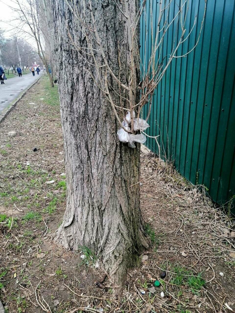 Другой Бердянск: «Здравствуй, мусор!» (ФОТО), фото-10