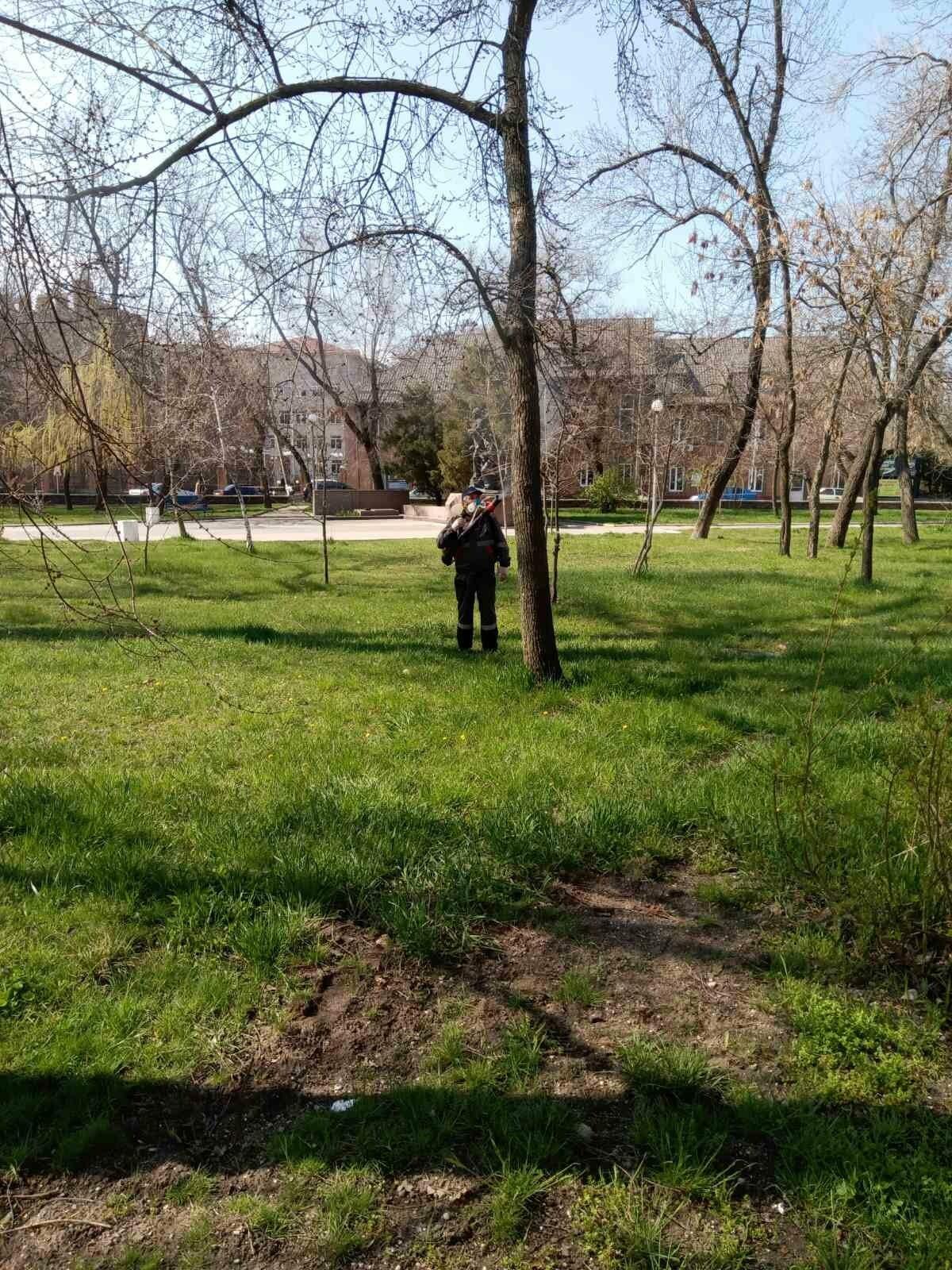 В центре Бердянска начали обрабатывать деревья специальным раствором (ФОТО), фото-3