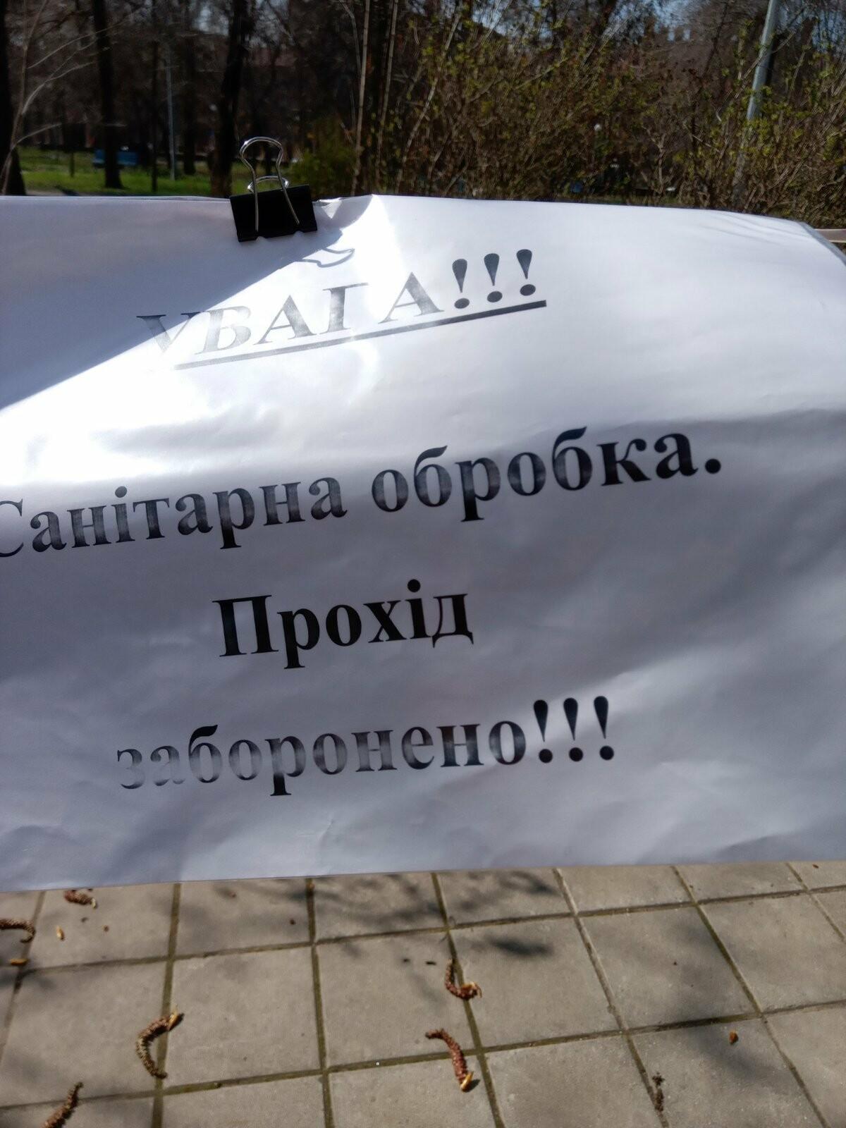 В центре Бердянска начали обрабатывать деревья специальным раствором (ФОТО), фото-4