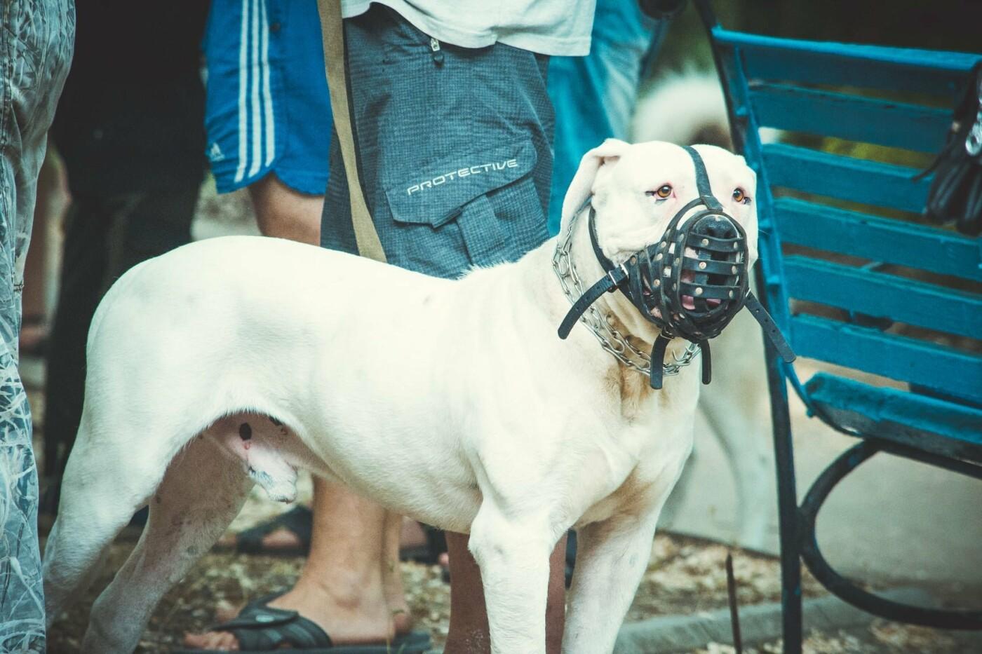 В Бердянске прошла выставка всепородных собак (ФОТО), фото-15