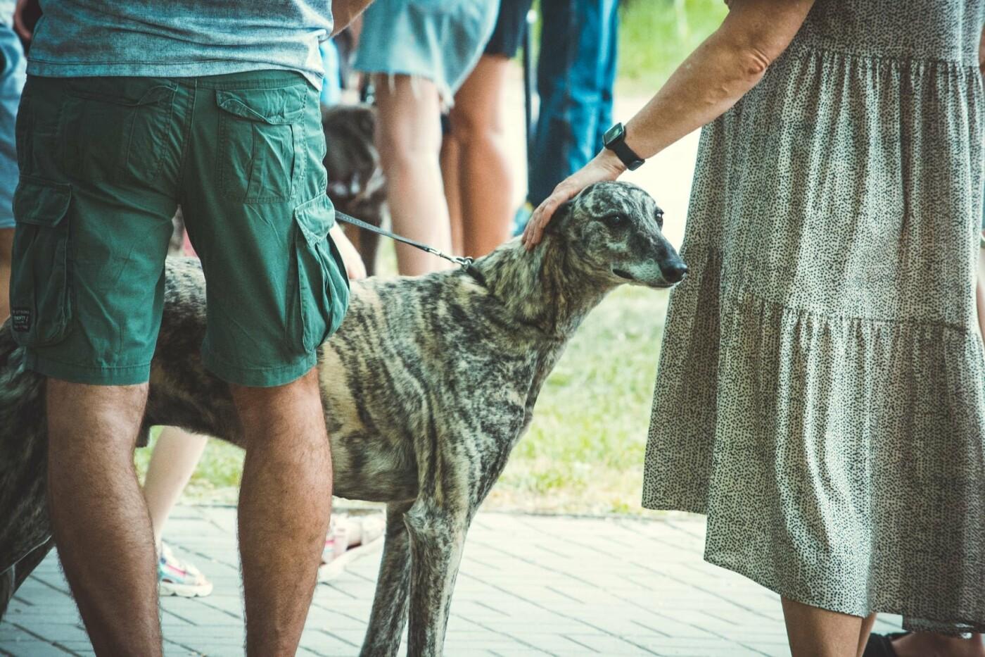 В Бердянске прошла выставка всепородных собак (ФОТО), фото-12