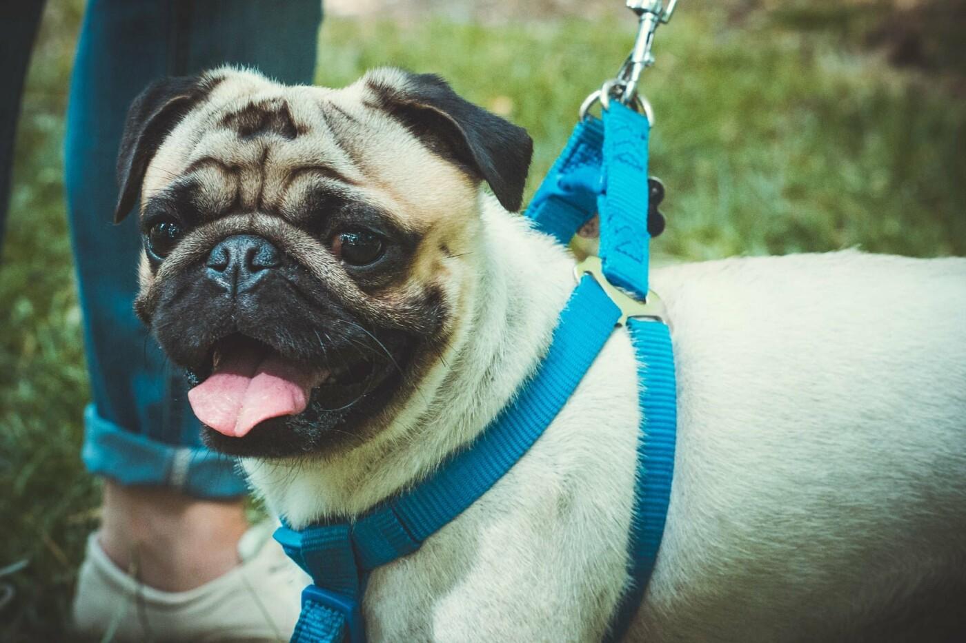 В Бердянске прошла выставка всепородных собак (ФОТО), фото-9