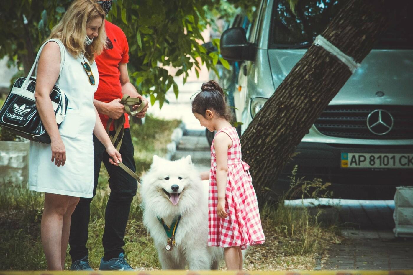 В Бердянске прошла выставка всепородных собак (ФОТО), фото-7