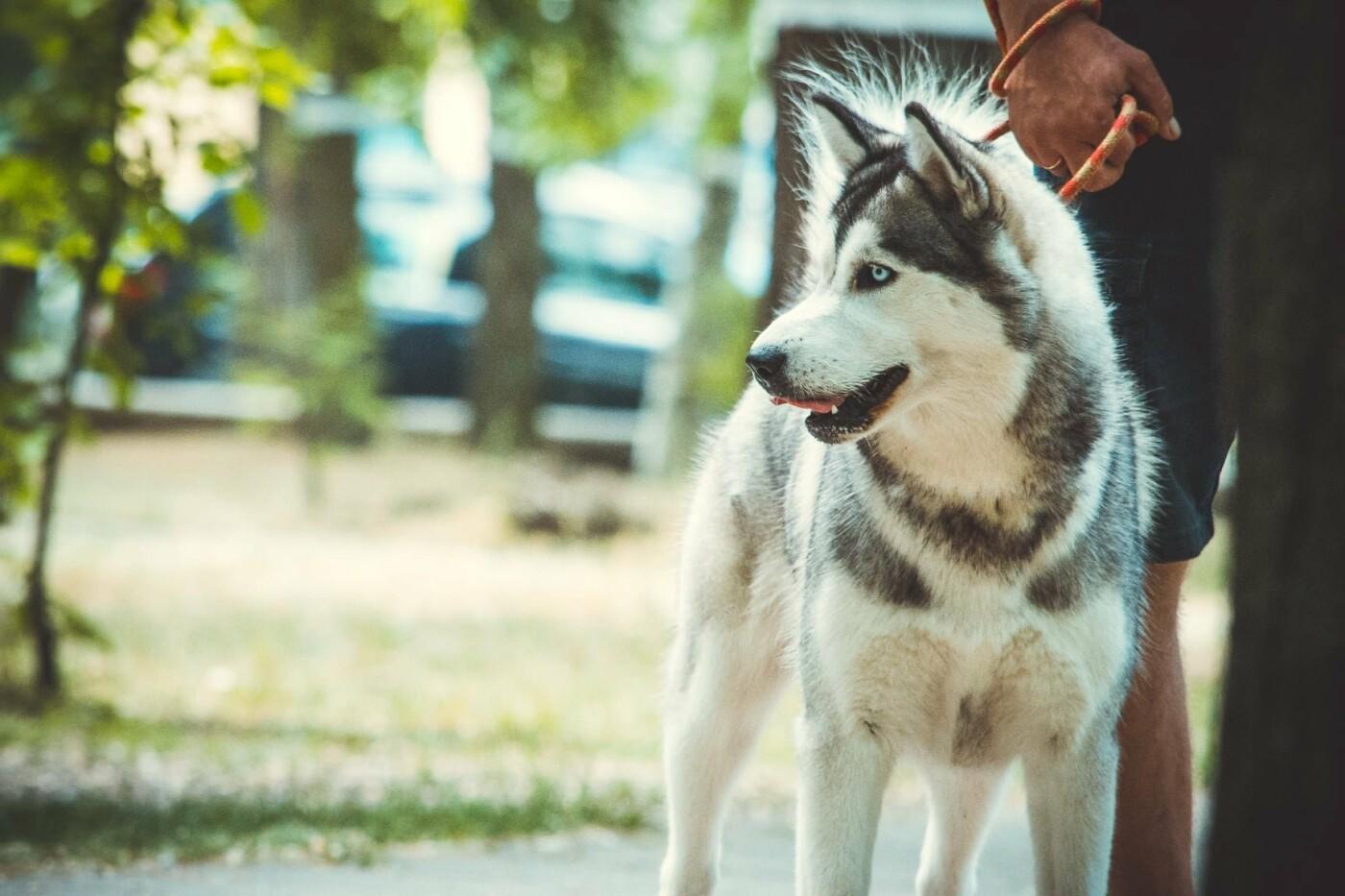 В Бердянске прошла выставка всепородных собак (ФОТО), фото-6