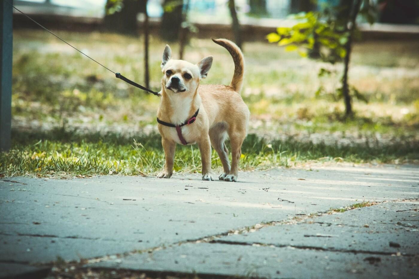 В Бердянске прошла выставка всепородных собак (ФОТО), фото-4