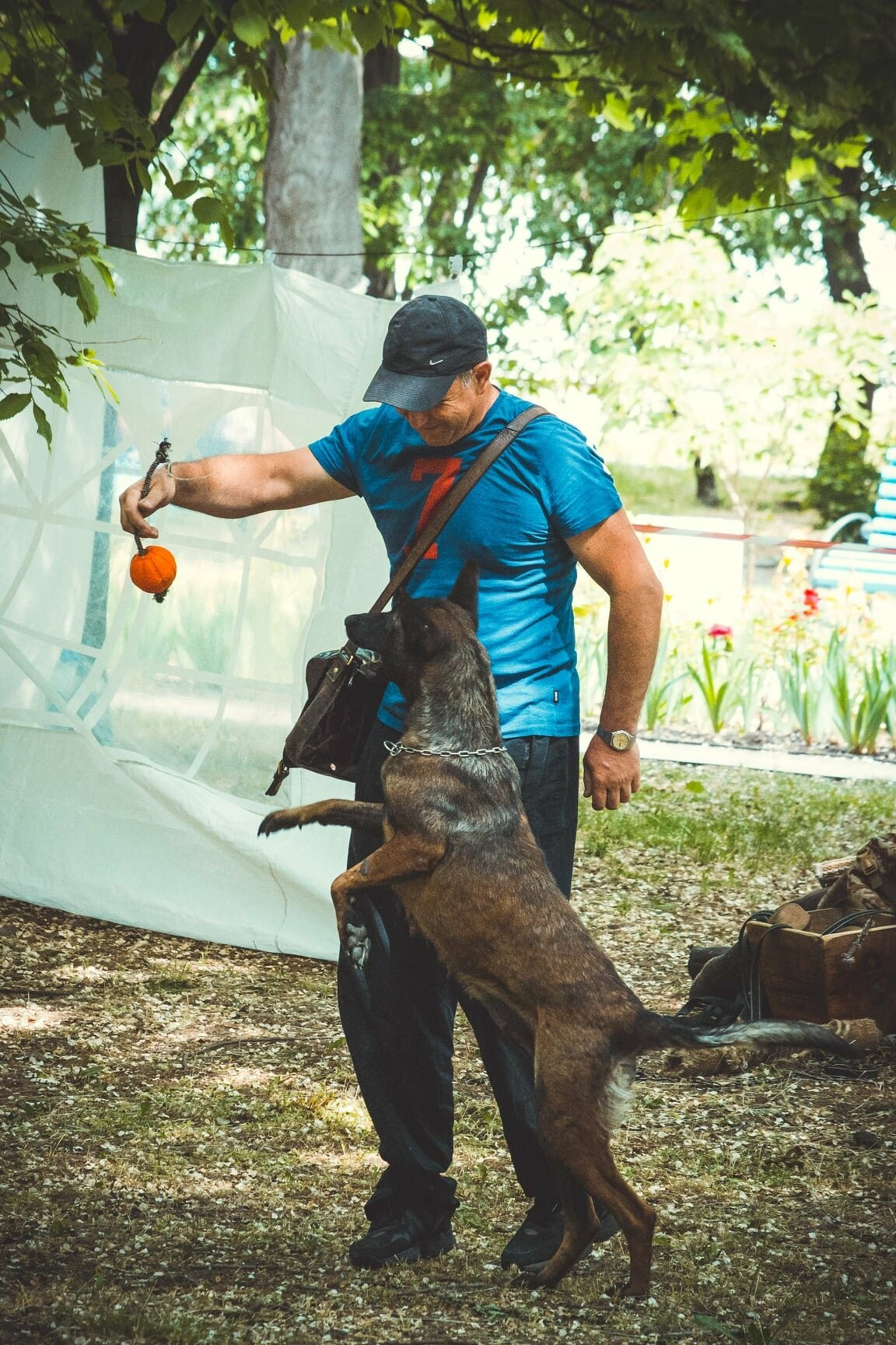 В Бердянске прошла выставка всепородных собак (ФОТО), фото-2