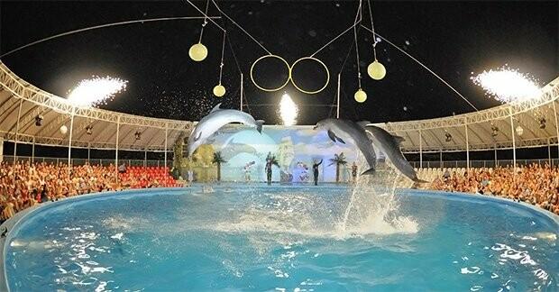 """Летний досуг в Бердянске: дельфинарий """"Немо"""", фото-2"""