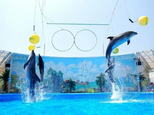 """Летний досуг в Бердянске: дельфинарий """"Немо"""", фото-1"""