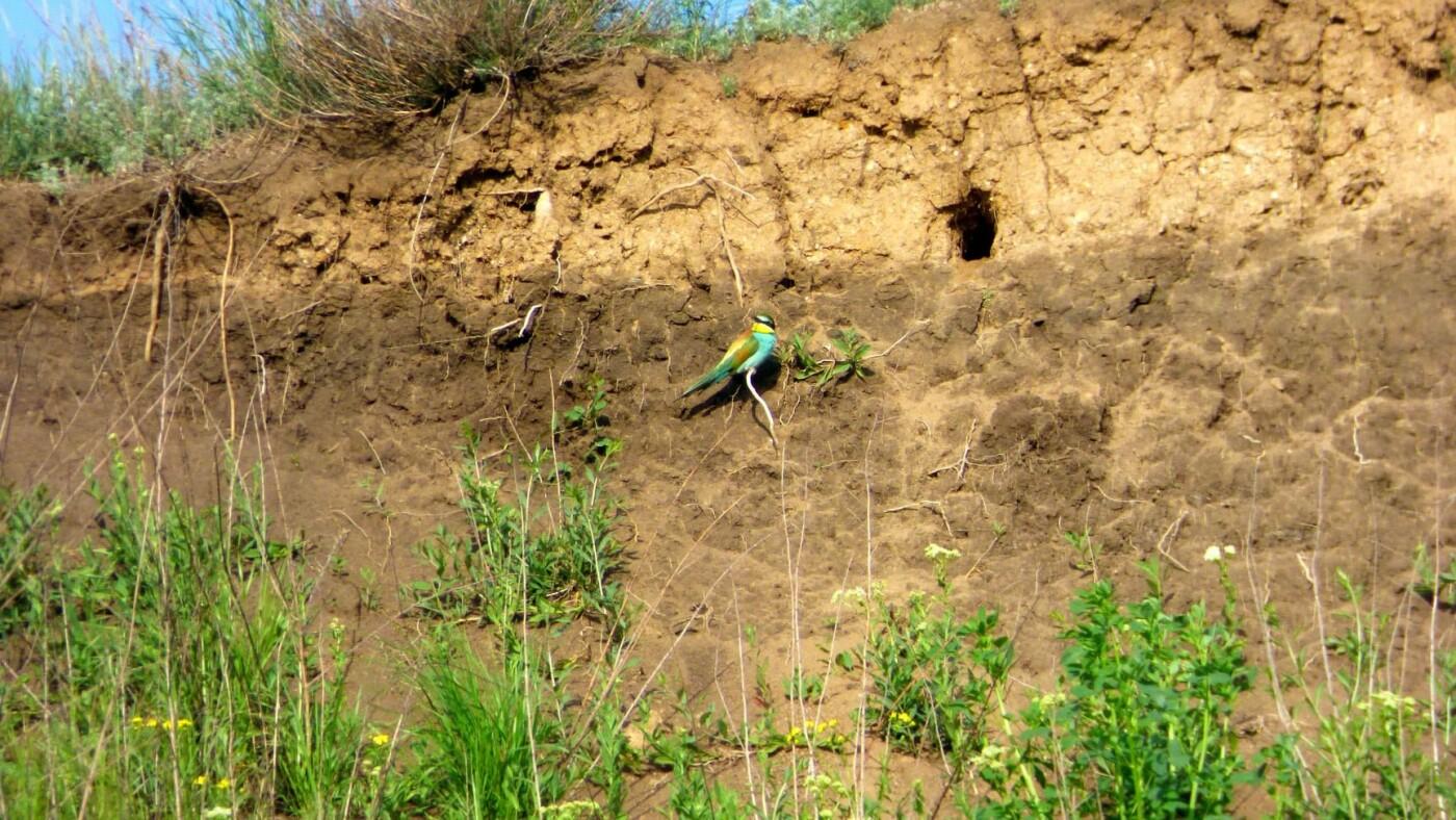 В Бердянский район на лето прилетают яркоперые птицы (ФОТО), фото-3