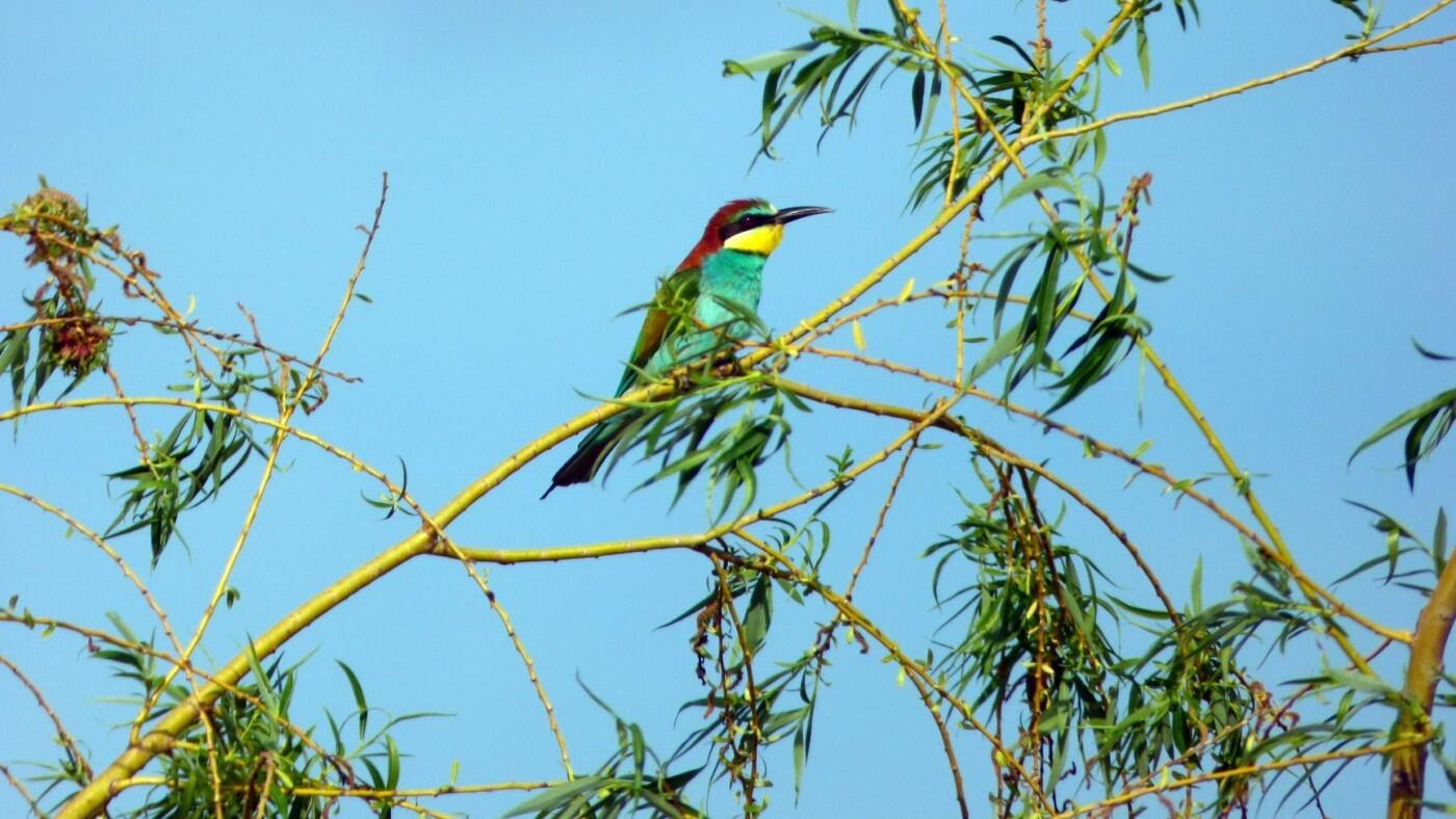 В Бердянский район на лето прилетают яркоперые птицы (ФОТО), фото-1