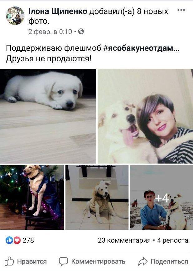 Бердянці проти сплати за газ...собаками!, фото-3