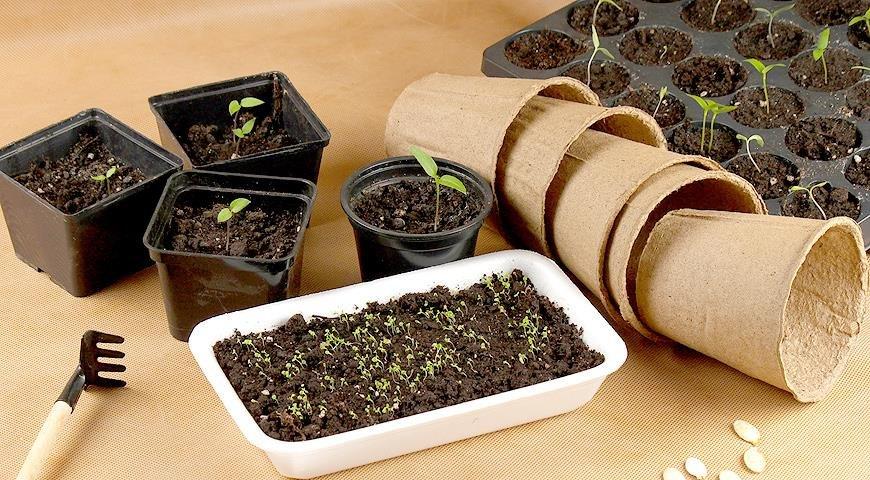 Высококачественные семена сельскохозяйственных культур от ООО Алекс, фото-1