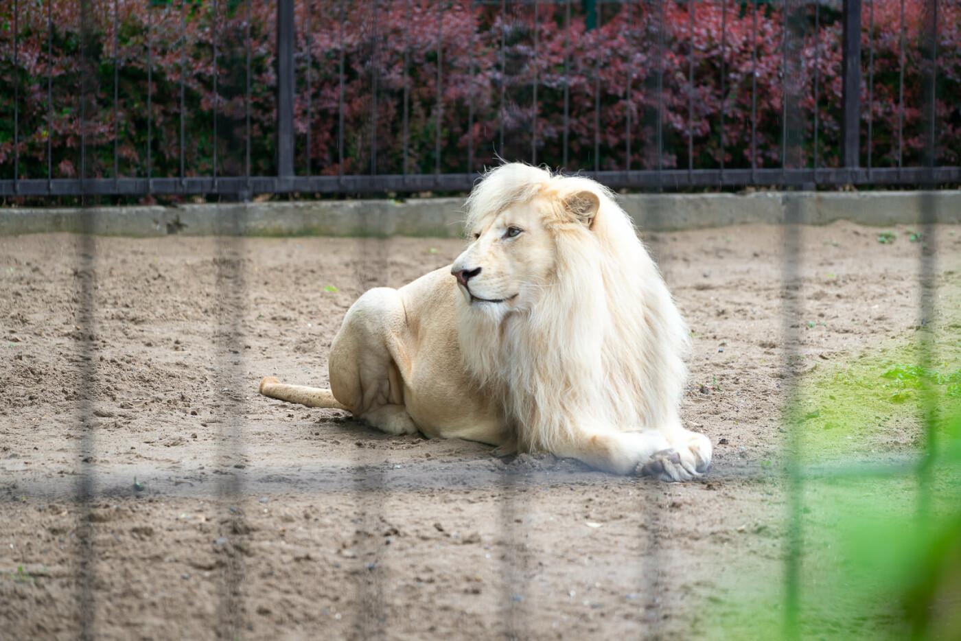 Час милуватися тваринами з Бердянського зоопарку «Сафарі», - ФОТО, фото-31