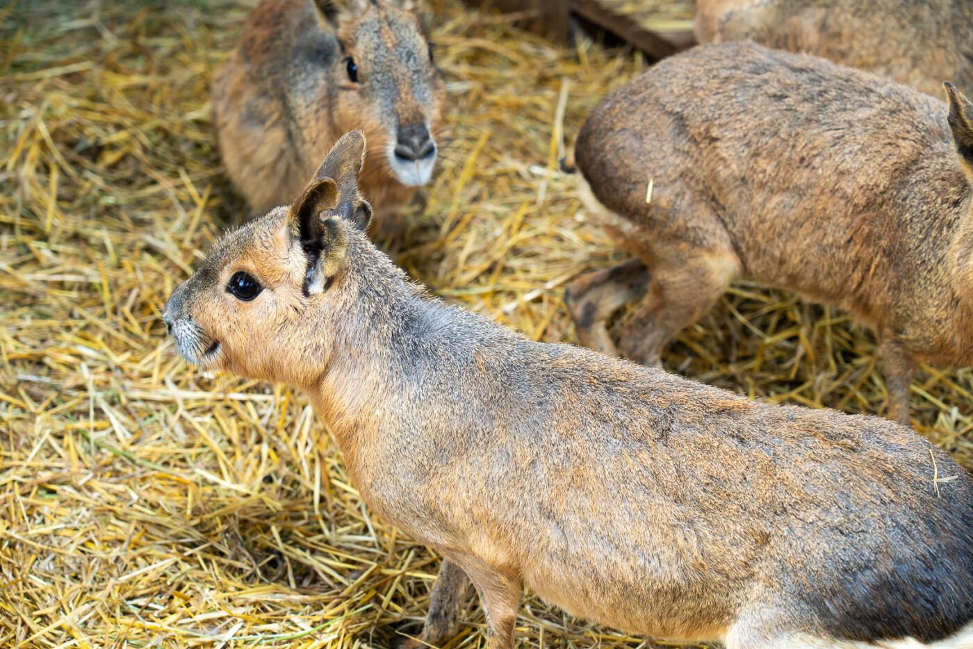 Час милуватися тваринами з Бердянського зоопарку «Сафарі», - ФОТО, фото-2