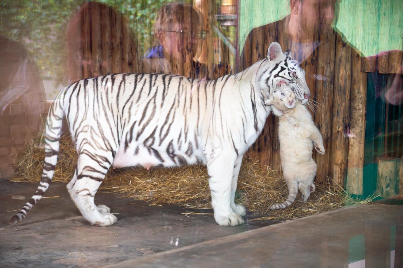 Час милуватися тваринами з Бердянського зоопарку «Сафарі», - ФОТО, фото-28