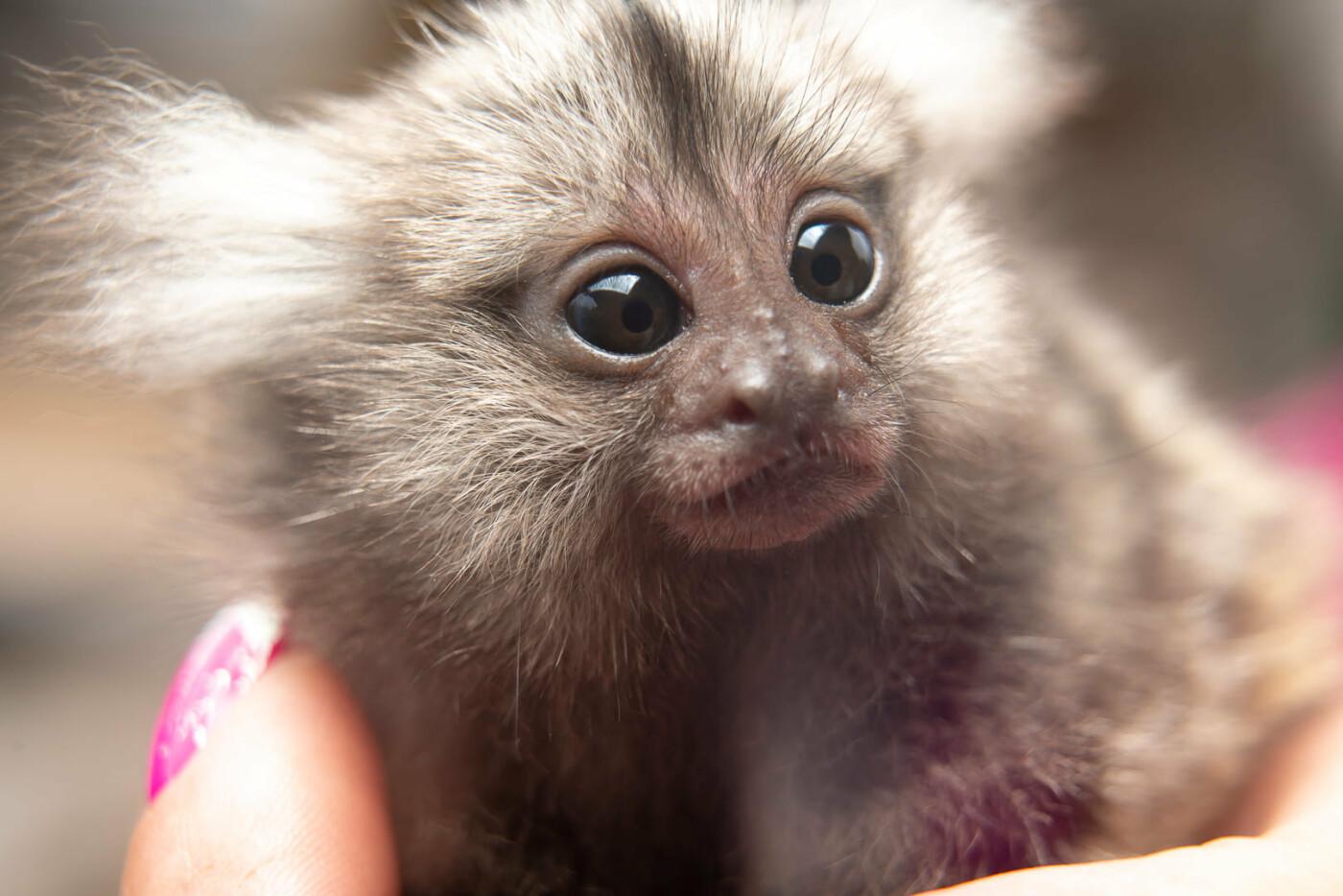 Час милуватися тваринами з Бердянського зоопарку «Сафарі», - ФОТО, фото-36