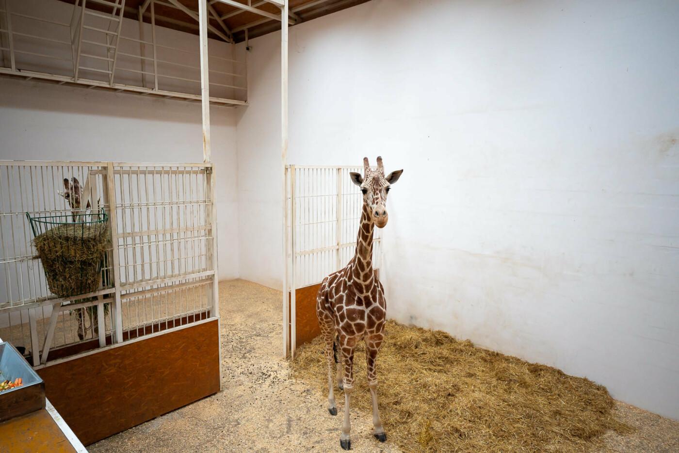 Час милуватися тваринами з Бердянського зоопарку «Сафарі», - ФОТО, фото-9