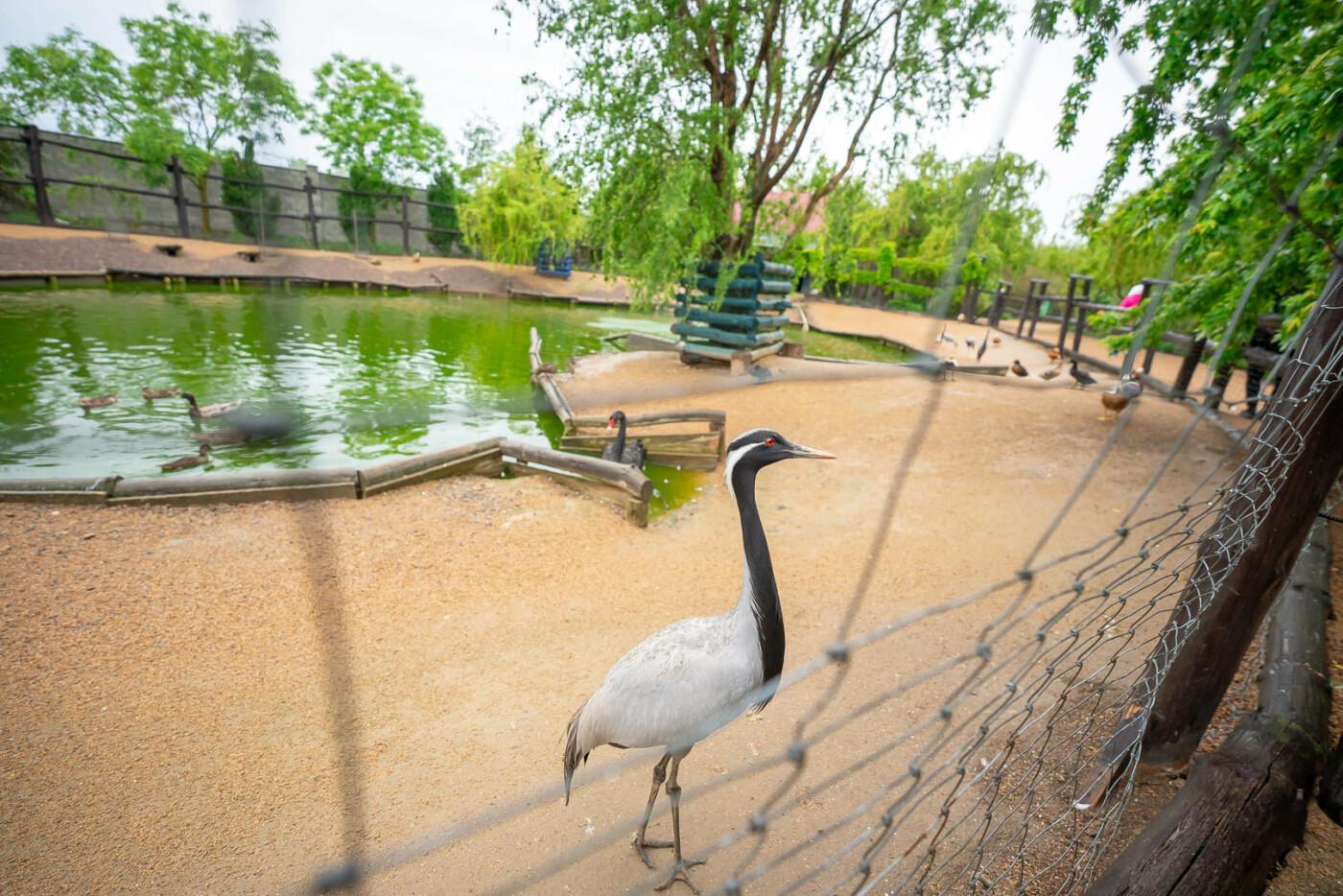 Час милуватися тваринами з Бердянського зоопарку «Сафарі», - ФОТО, фото-10