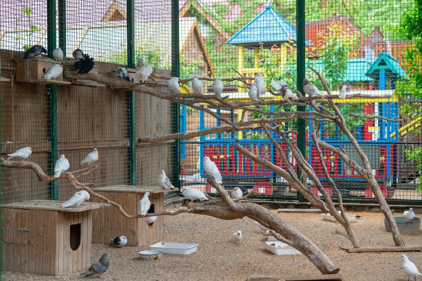 Час милуватися тваринами з Бердянського зоопарку «Сафарі», - ФОТО, фото-11