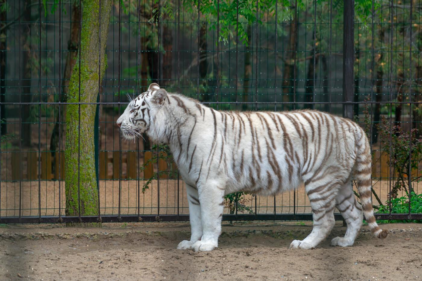 Час милуватися тваринами з Бердянського зоопарку «Сафарі», - ФОТО, фото-27