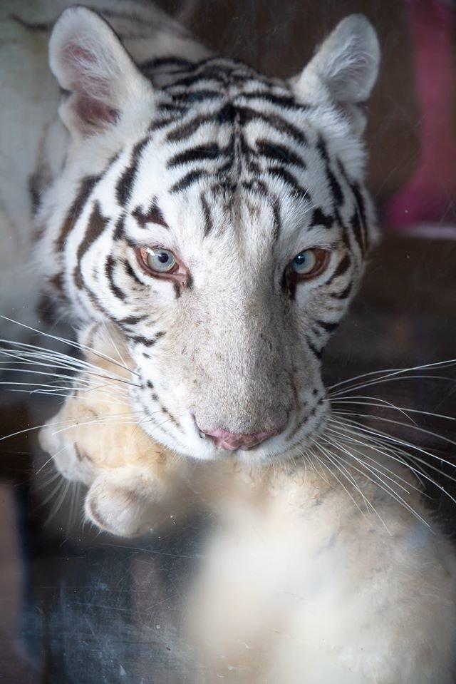 Час милуватися тваринами з Бердянського зоопарку «Сафарі», - ФОТО, фото-30