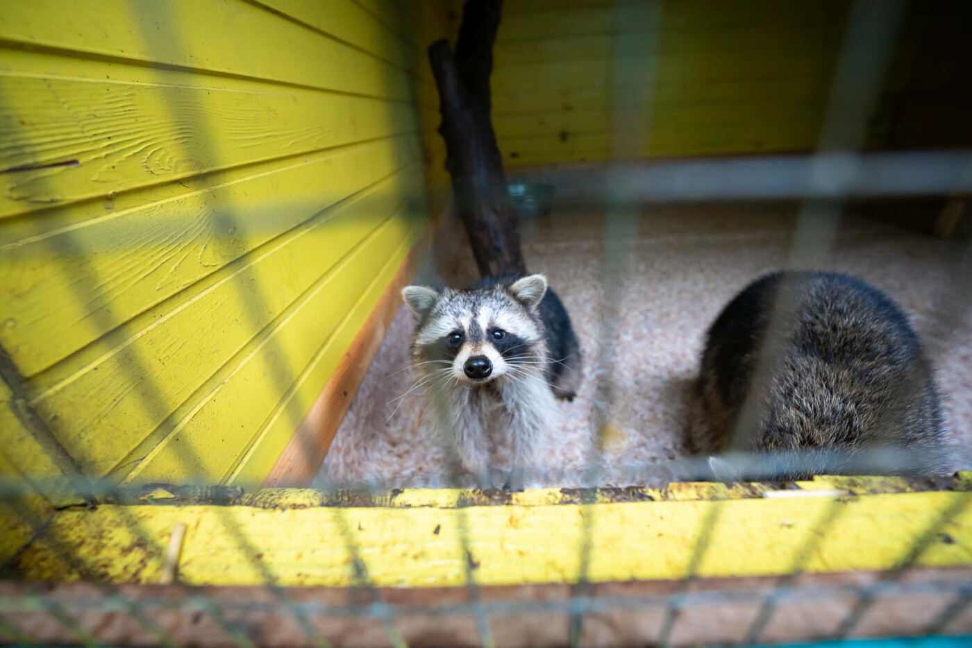 Час милуватися тваринами з Бердянського зоопарку «Сафарі», - ФОТО, фото-12