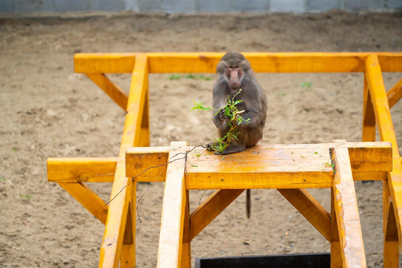 Час милуватися тваринами з Бердянського зоопарку «Сафарі», - ФОТО, фото-14