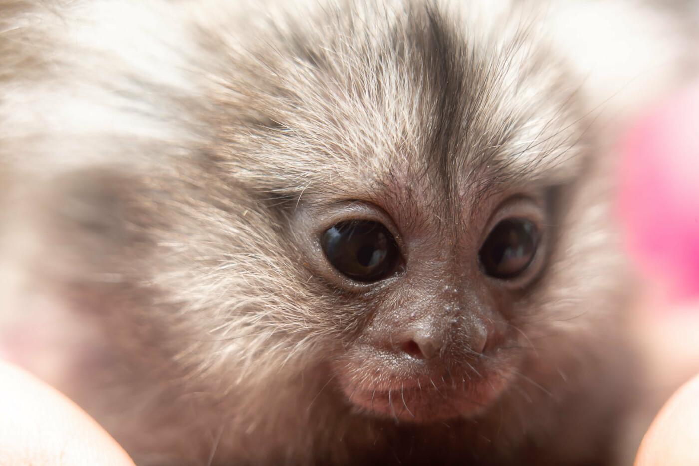 Час милуватися тваринами з Бердянського зоопарку «Сафарі», - ФОТО, фото-37