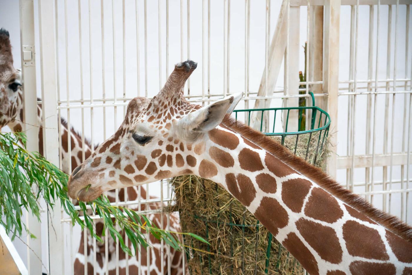 Час милуватися тваринами з Бердянського зоопарку «Сафарі», - ФОТО, фото-6