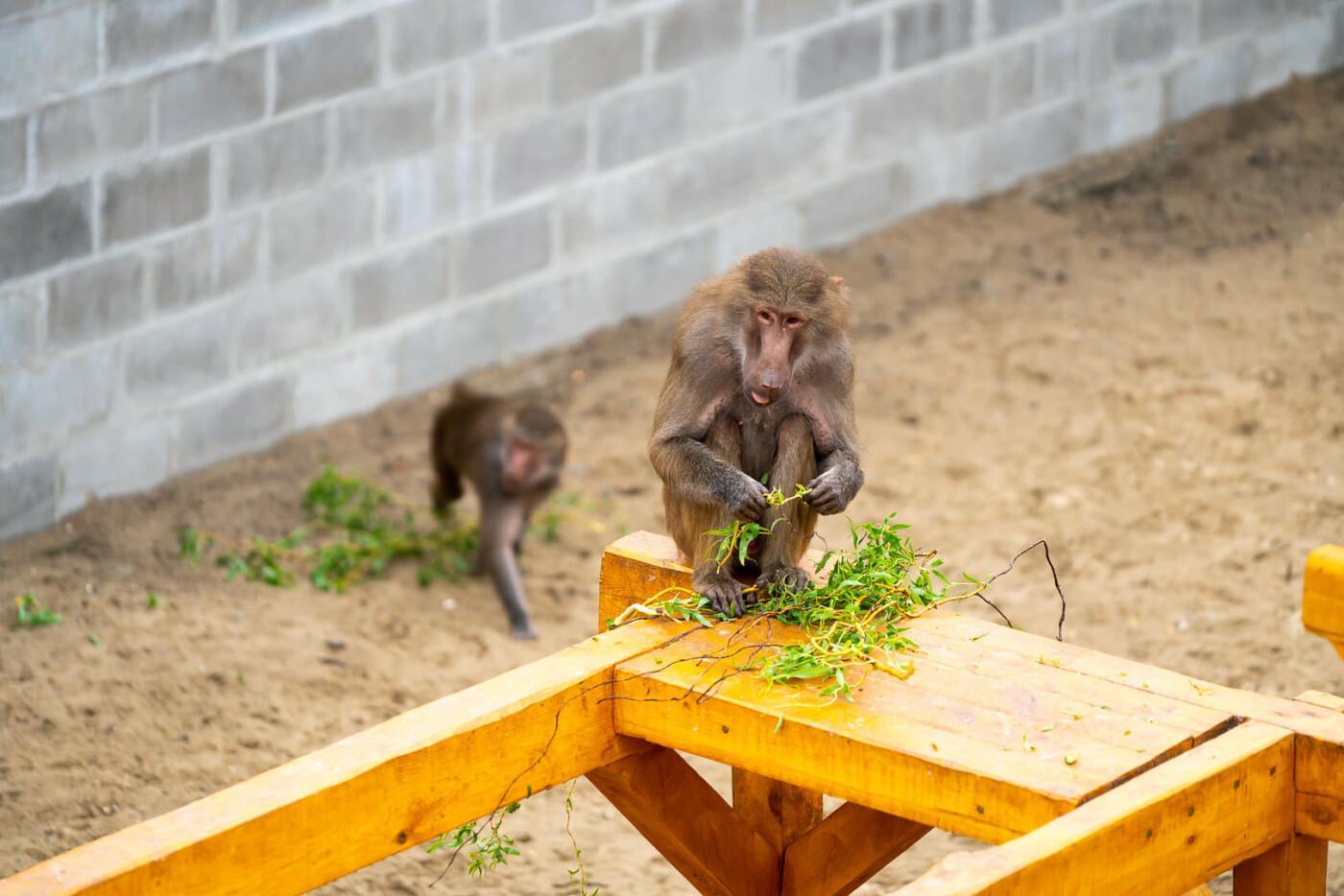 Час милуватися тваринами з Бердянського зоопарку «Сафарі», - ФОТО, фото-15