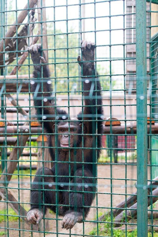Час милуватися тваринами з Бердянського зоопарку «Сафарі», - ФОТО, фото-18