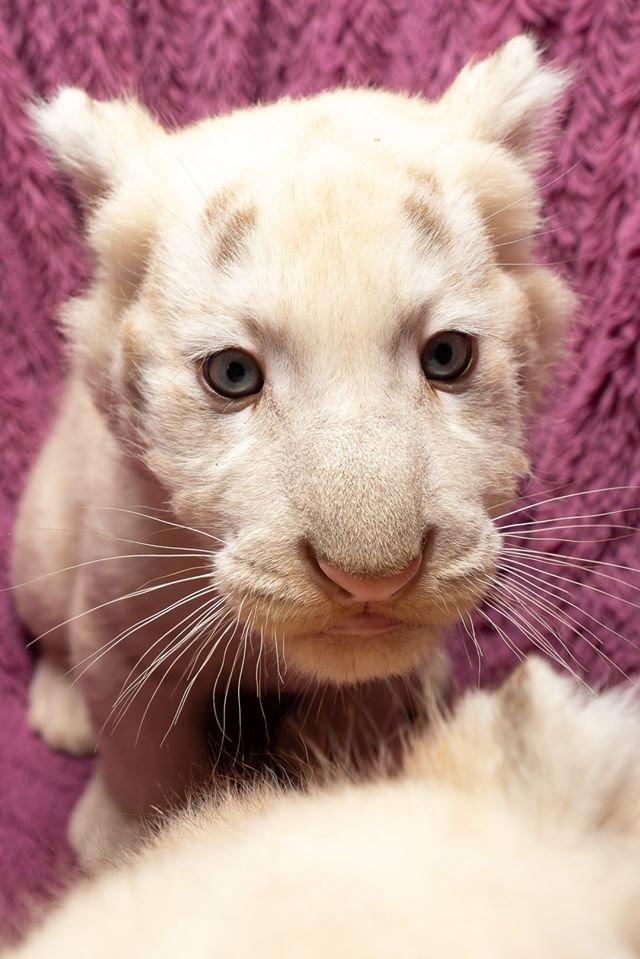 Час милуватися тваринами з Бердянського зоопарку «Сафарі», - ФОТО, фото-40