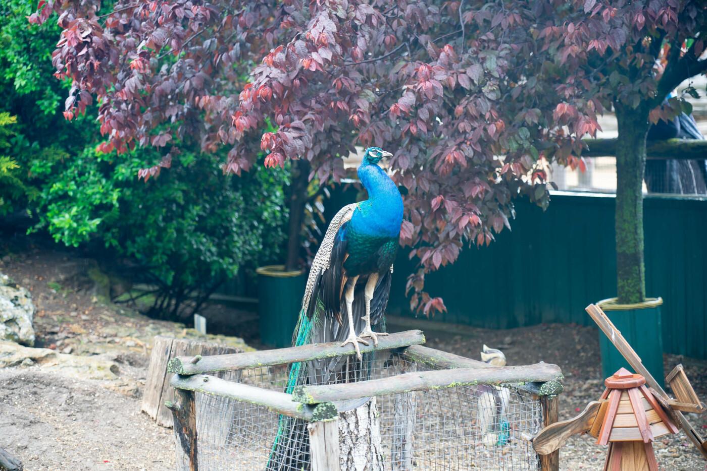 Час милуватися тваринами з Бердянського зоопарку «Сафарі», - ФОТО, фото-24