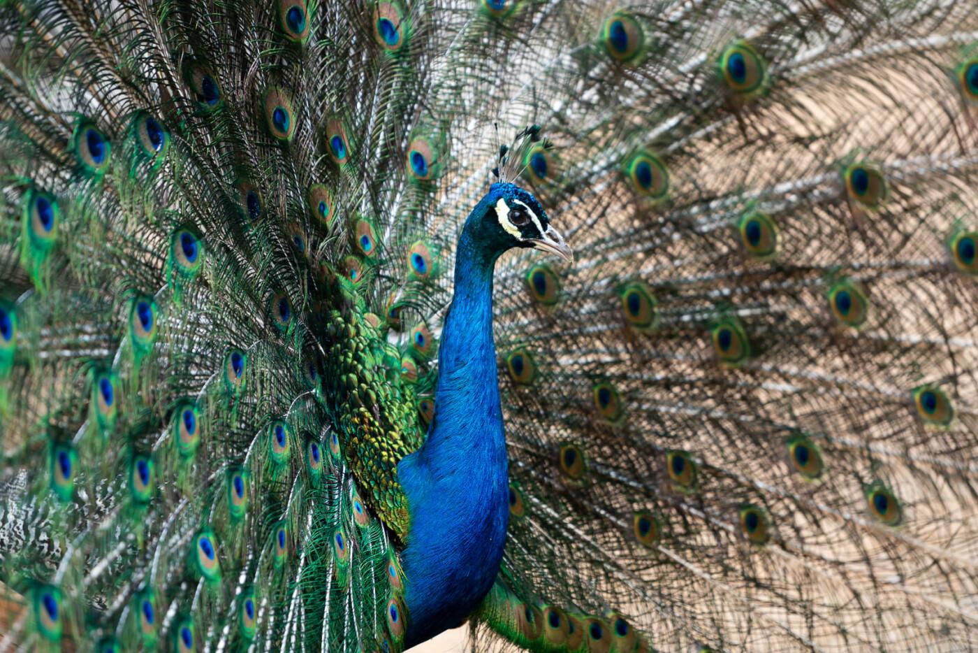 Час милуватися тваринами з Бердянського зоопарку «Сафарі», - ФОТО, фото-22