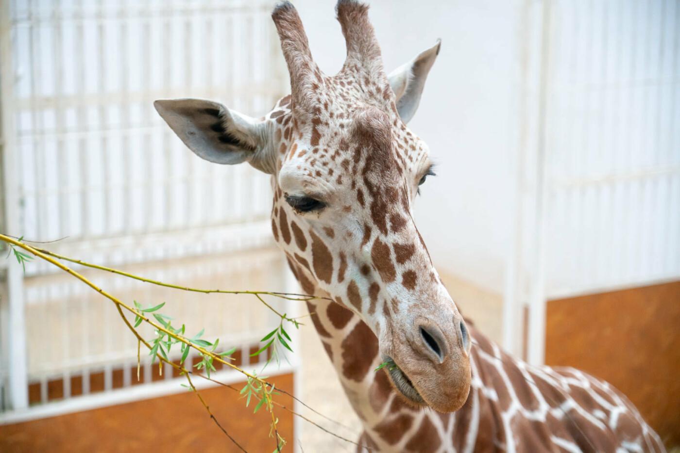 Час милуватися тваринами з Бердянського зоопарку «Сафарі», - ФОТО, фото-7
