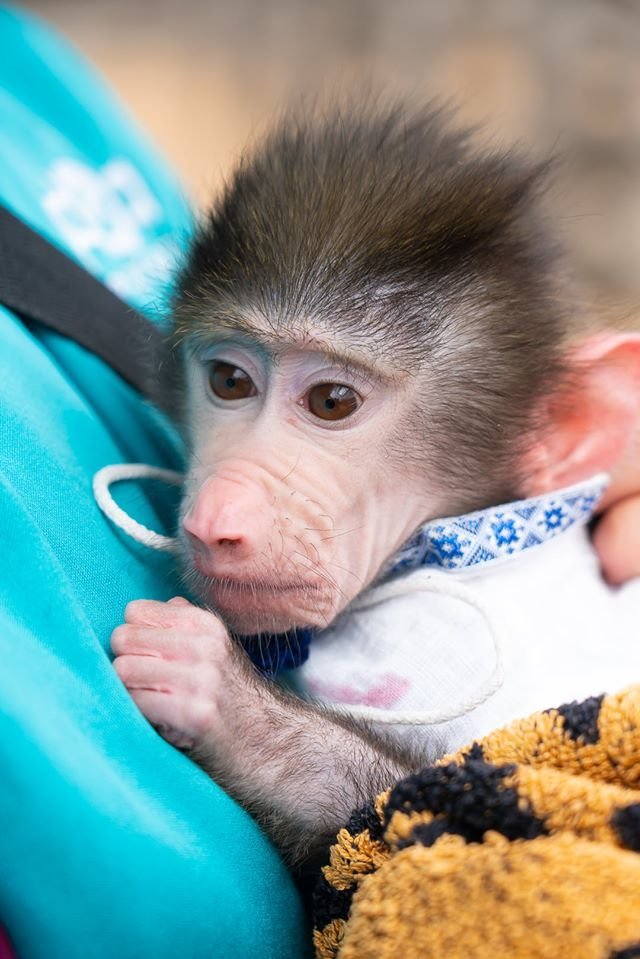 Час милуватися тваринами з Бердянського зоопарку «Сафарі», - ФОТО, фото-16