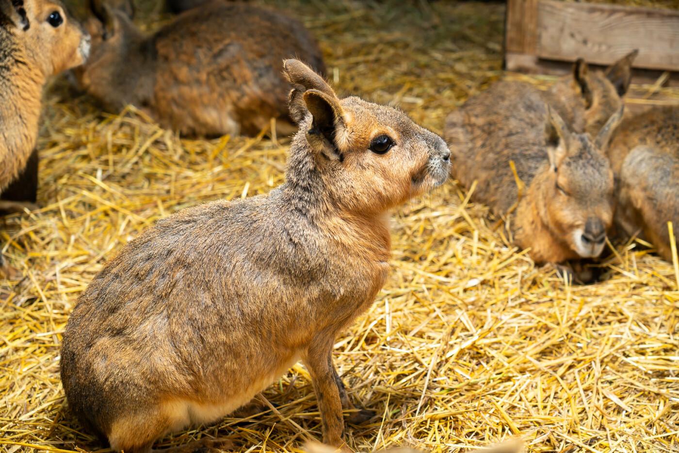 Час милуватися тваринами з Бердянського зоопарку «Сафарі», - ФОТО, фото-3